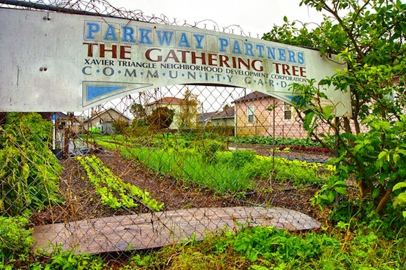 A Gert Town garden is one of many that have sprouted under the banner of Parkway Partners.