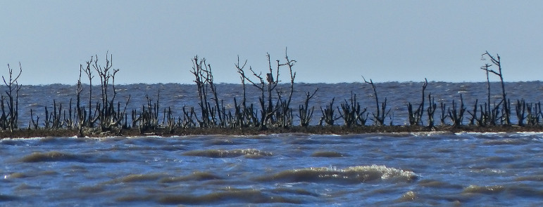 Most of the mangrove islands that were nesting sites in eastern Barataria Bay before the Deepwater Horizon spill four years ago now are open water, while a few others are just slivers of dead breaches and sand.