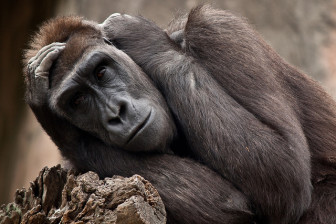Are zoo denizens living better than we humans, or are we humans starting to feel like caged animals?