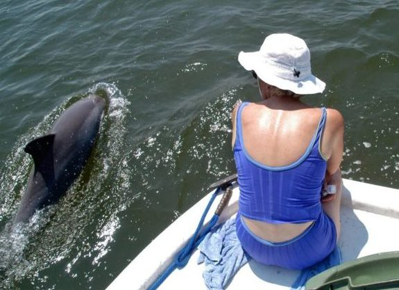 Bottlenose dolphins have long been friendly companions for boaters in Barataria Bay but they could be a big problem for the state's plan to use river diversions to rebuild the coast.